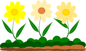 header image displaying three flowers